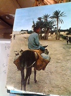 TUNISIA KEBILI OASIS ASINO ANE   VB1972 GU3375 - Tunisia