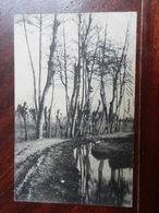18502) LOCALITA' DA IDENTIFICARE PIANURA PADANA VIAGGIATA 1902 MOTO BELLA - Cartoline