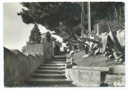 CPSM SANARY SUR MER, CHEMIN DES ORATOIRES, VAR 83 - Sanary-sur-Mer