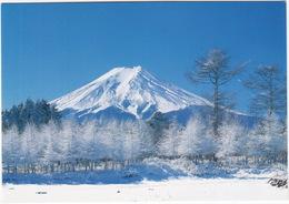 Winter Hoarfrost Near Mt. Fuji - (Japan) - Japan