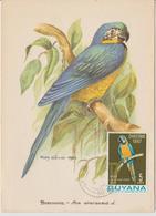 Guyana Carte Maximum 1967 Oiseau Perroquet 258 - Guyane (1966-...)