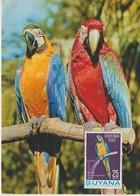 Guyana Carte Maximum 1967 Oiseau Perroquet 259 - Guyane (1966-...)
