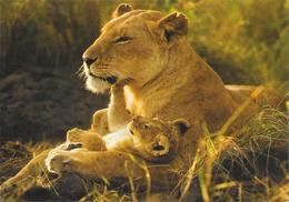 Carte Postale De Lionne. (Voir Commentaires) - Lions