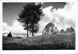 Cartolina Dolomiti Gruppo Sella E Sassolungo Touring Club Italiano 1951 Dannegg - Bolzano (Bozen)
