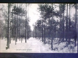 LOMBARDIA -MONZA -LIMBIATE -F.P. LOTTO N°577 - Monza