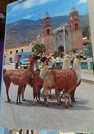 PERU Llamas LAMA IN PLAZA DE ARMAS  DE HUANTA AYACUCHO  CAMION V1975 GU3390 - Perù