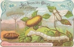 CHROMO Descriptive - Les Insectes Utiles à Protéger - Ver à Soie - Cromos