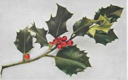AK 0028  Stechpalme - Naturfarben Photo Um 1920 - Blumen