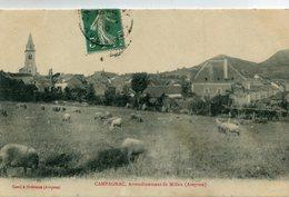 CAMPAGNAC(COCHON) - France
