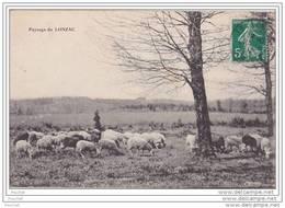 19) Paysage Du Lonzac.- (Bergère - Mouton Au Pâturage) - France