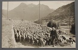 Le Briançonnais - Moutons - Les Transhumants - Ed. Thomas - Vers 1950 - Briancon