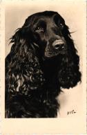 COCKER NOIR  REF 56971 - Cani