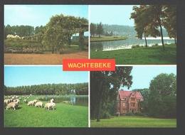 Wachtebeke - Bloementuin - Provinciaal Domein - Schaapherder - Algemeen Zicht - Molenmuseum - Wachtebeke