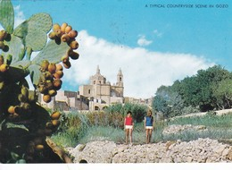Postcard A Typical Countryside Scene In Gozo Malta PU 1982 My Ref  B23001 - Malta
