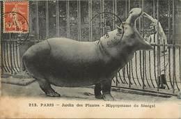 Ref 30- Zoos - Zoo - Paris - Jardin Des Plantes - Hippopotame Du Senegal - Hippopotames - Carte Bon Etat  - - Hippopotames