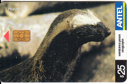 URUGUAY - Animal, Huron(276a), 04/03, Used - Uruguay