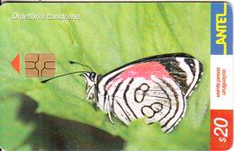 URUGUAY - Butterfly, Diaethria Candrena(243a), 08/02, Used - Uruguay