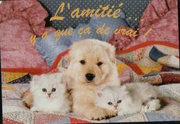 4660A   CHIENS   ECRITE - Dogs