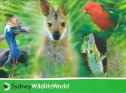 Sydney WildlifeWorld, New South Wales Unused - Wallaby, Parrot, Dragon, Cassowary - Sydney