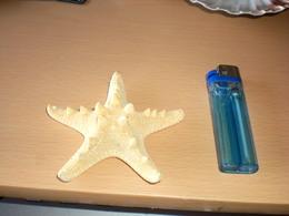 Starfish - Coquillages