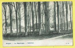 * Brugge - Bruges (West Vlaanderen) * (nr 63) Le Béguinage, Intérieur, Binnenzicht Begijnhof, Jardin, Parc, Rare - Brugge