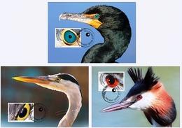 LIECHTENSTEIN 2018 Set Of 3 MC Maxicards Artistic Photography Birds Eyes Bird Oiseaux - Oiseaux