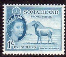 British Somaliland 1953-8 1/- Berbera Blackhead Sheep Value, MNH, SG 144 (BA) - Somaliland (Protectorate ...-1959)