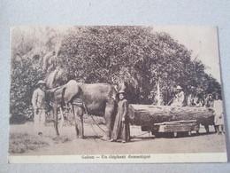 Gabon . Un Elephant Domestique .tirant Un Tronc D Arbre - Gabon