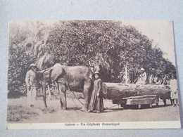 Gabon . Un Elephant Domestique .tirant Un Tronc D Arbre - Gabun
