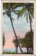 AMERIQUE / ETATS-UNIS / HAWAII / Climbing Cocoanut Tree / Hawaiian Islands - Ref D14 - Big Island Of Hawaii
