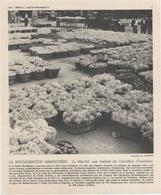 Gravure 20 X 24  - Le Marché Aux Melons De Cavaillon (Vaucluse) - Old Paper