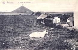Waterloo-La Plaine De Waterloo-1912-Oh La Vache - Waterloo