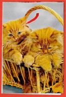 Calendrier Publicitaire Petit Format 1971 Chatons Dans Un Panier - Horlogerie Bijouterie JALON Rue Ravignan 75018 Paris - Calendars