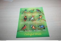 Birds  2017 Ghana - Birds