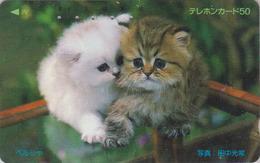 Télécarte Japon / 110-77580 - ANIMAL - CHAT Chats - CAT Japan Phonecard - KATZE - GATTO - GATO -  4714 - Chats