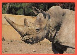 "PARC ZOOLOGIQUE SAFARI DE FRÉJUS (83) - ""NESTOR"" RHINOCÉROS BLANC - Rinoceronte"