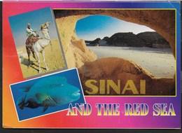 EGITTO - SINAI AND THE RED SEA - VIAGGIATA FRANCOBOLLO ASPORTATO - Egitto