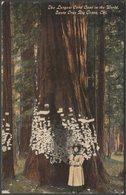 Largest Card Case, Santa Cruz Big Trees, California, 1913 - Pacific Novelty Co Postcard - United States