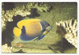 EVENTAIL DU JAPON - Pescados Y Crustáceos