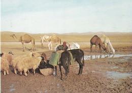 JUDEAN DESERT. NEAR THE WELL IN THE DESERT. STAR CARDS. UNUSED. CIRCA 1990's- BLEUP - Israël