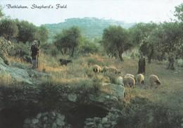 BETHLEHEM, SHEPHERD'S FIELD. STAR CARDS. UNUSED. CIRCA 1990's- BLEUP - Israël