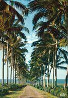 1 AK Reunion * Allée De Cocotiers * Übersee-Departement Von Frankreich - Insel Im Indischen Ozean - IRIS Karte 6012 - Réunion