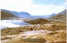 Océanie - TAAF Kerguelen Baie De La Table Front Du Glacier Ampère - TAAF : Terres Australes Antarctiques Françaises