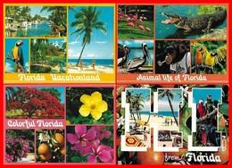 4 CPSM/gf FLORIDE (Etats-Unis)  Fleurs, Animaux, Multivues....H404 - Etats-Unis