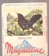 Buvard N°16 Merle Noir Mâle Biscottes GRANVILLE - Zwieback