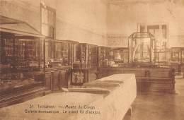 TERVUEREN - Musée Du Congo - Galerie économique - Le Grand Fût D'acajou - Tervuren