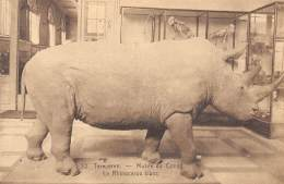TERVUEREN - Musée Du Congo - Le Rhinocéros Blanc - Tervuren