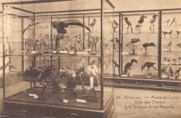 TERVUEREN - Musée Du Congo - Salle Des Oiseaux - Les Toucans Et Les Rapaces - Tervuren
