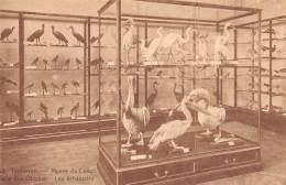 TERVUEREN - Musée Du Congo - Salle Des Oiseaux - Les échassiers - Tervuren