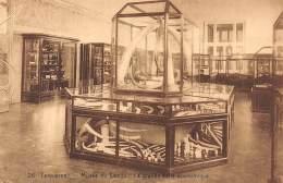 TERVUEREN - Musée Du Congo Belge - La Grande Salle économique - Tervuren
